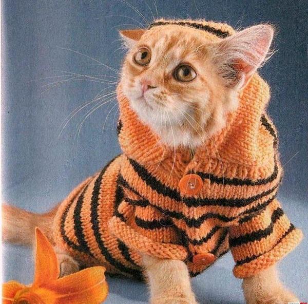 яркий полосатый свитер