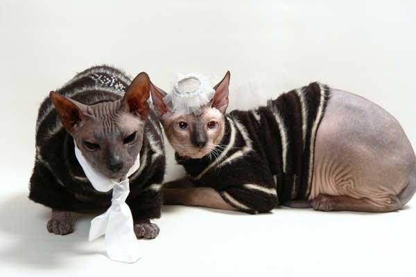 модные полосатые свитера