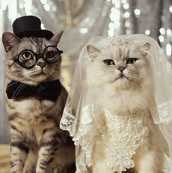 свадебный наряд жениха и невесты