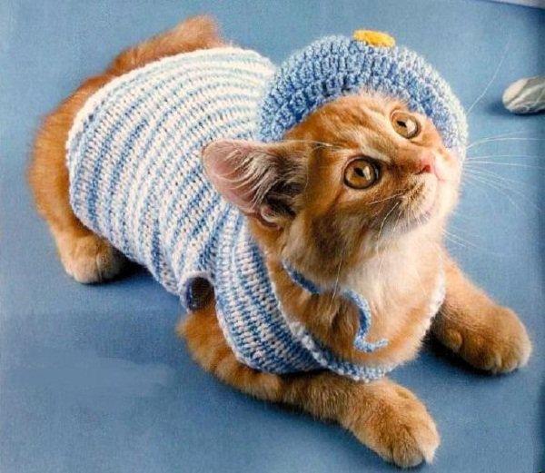 свитер полосатый с шапочкой