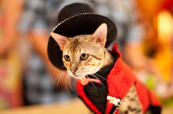 красный костюм с шляпой