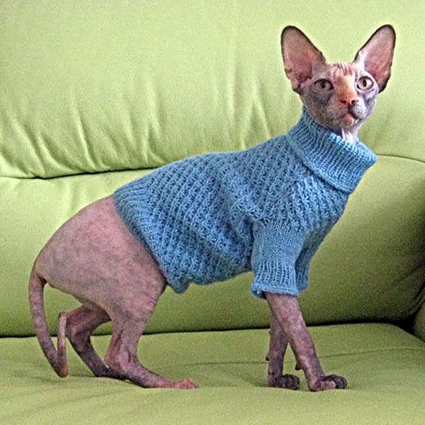 синий свитер с горлом