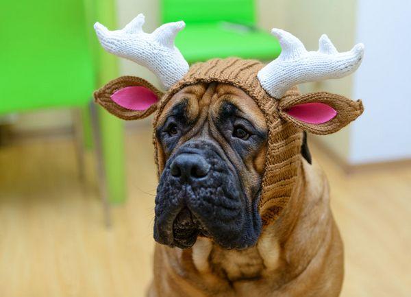 интересные шапки для собак