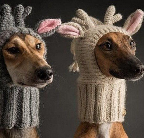 модные и удобные шапки