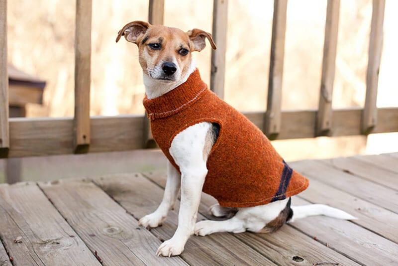 Одежда для маленьких собак своими руками