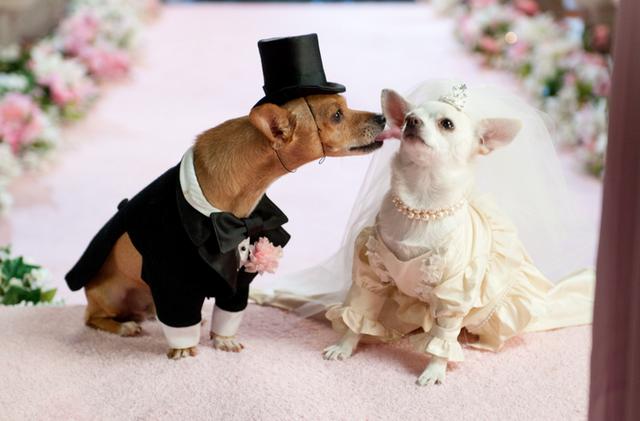 Что надеть на свадьбу собак