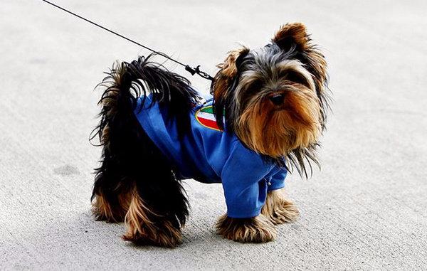 Для чего собаке нужна одежда