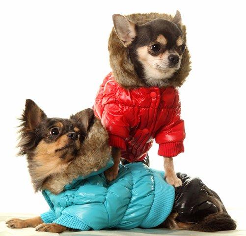 Идеи как одеть собаку