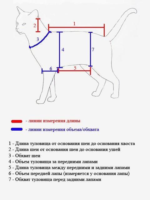 Как правильно снять мерки с животного