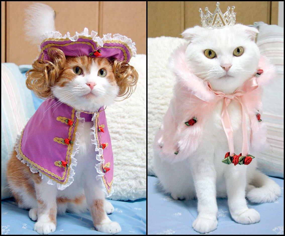 Фото смешные коты в одежде