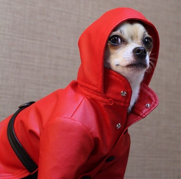 Красная куртка