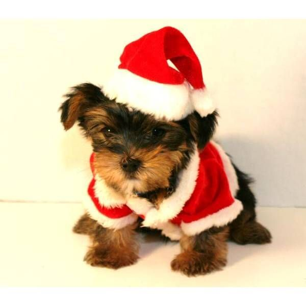 Красная одежда на Рождество для собаки