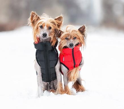 Куртка для животного