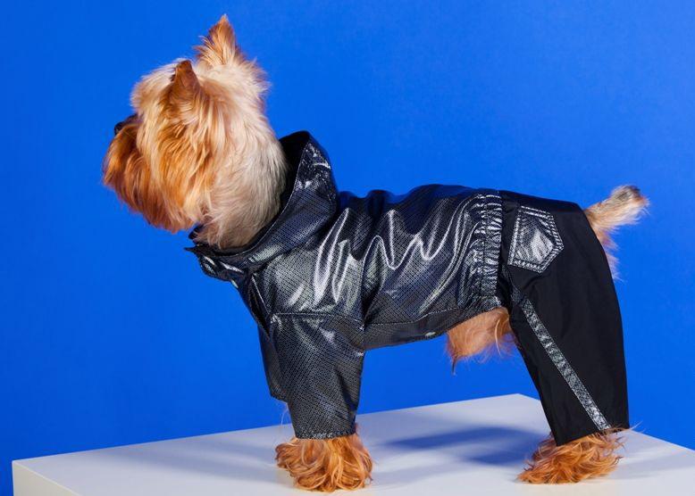 Мода по-собачьи