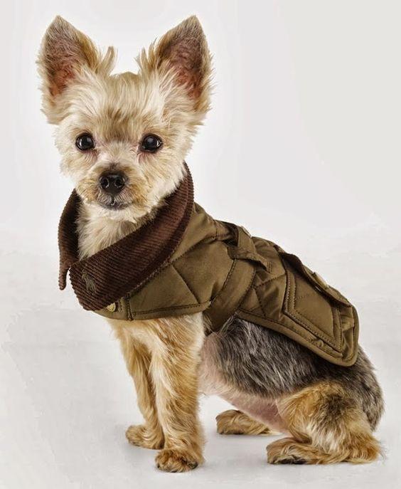 Пошить одежду для маленьких собак может быть несколько сложнее, так как будут мелкие детали