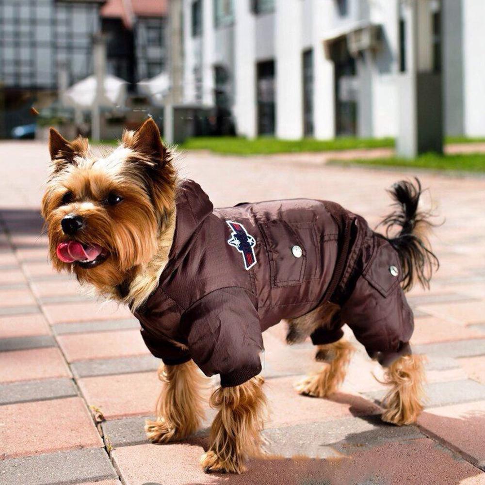 Собака на прогулке в одежде