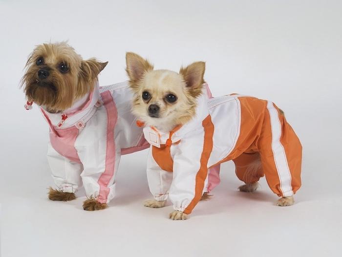 Собаки в куртках