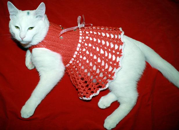 одежда для кошек своими руками модели с описанием и выкройками