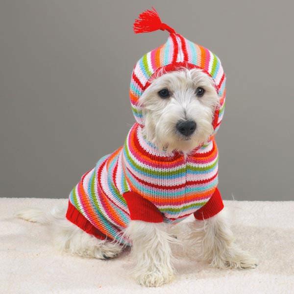 Вяжем одежду для домашних животных